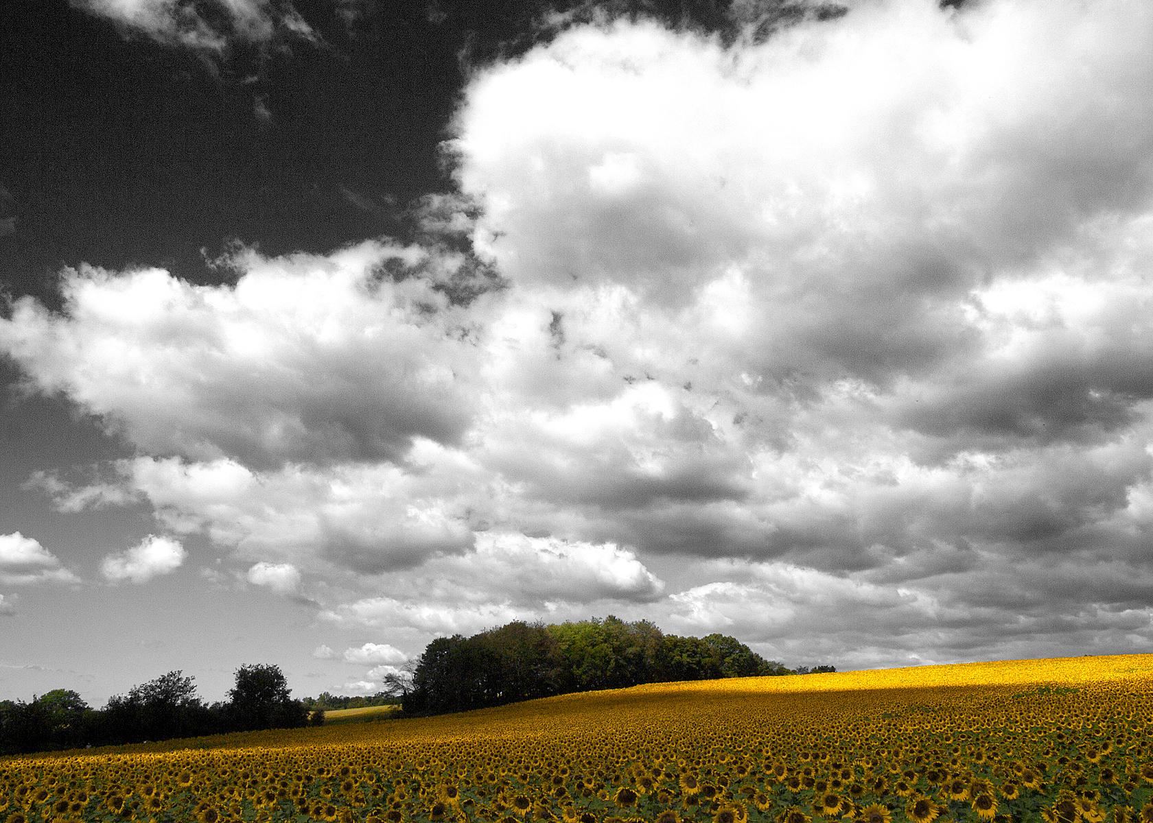 landscapes51.jpg