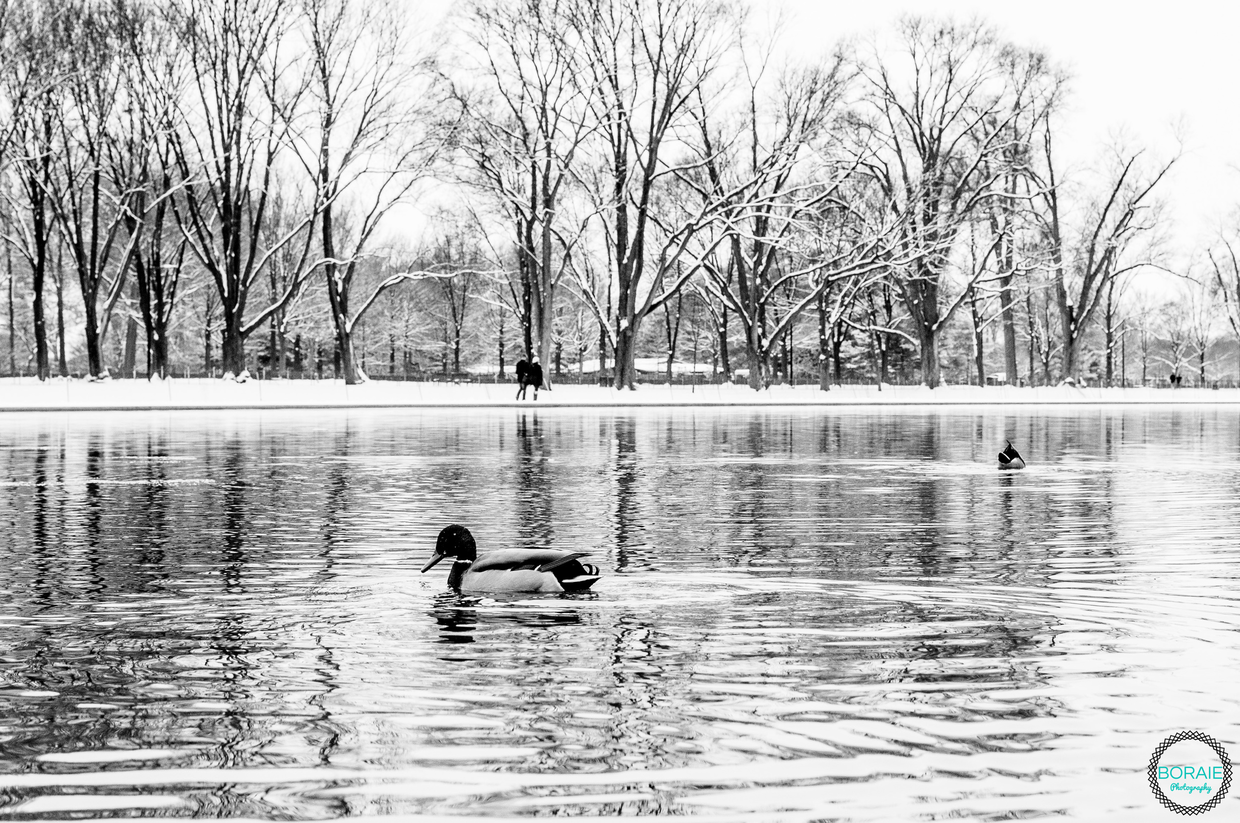 DC snow 6 january 2015