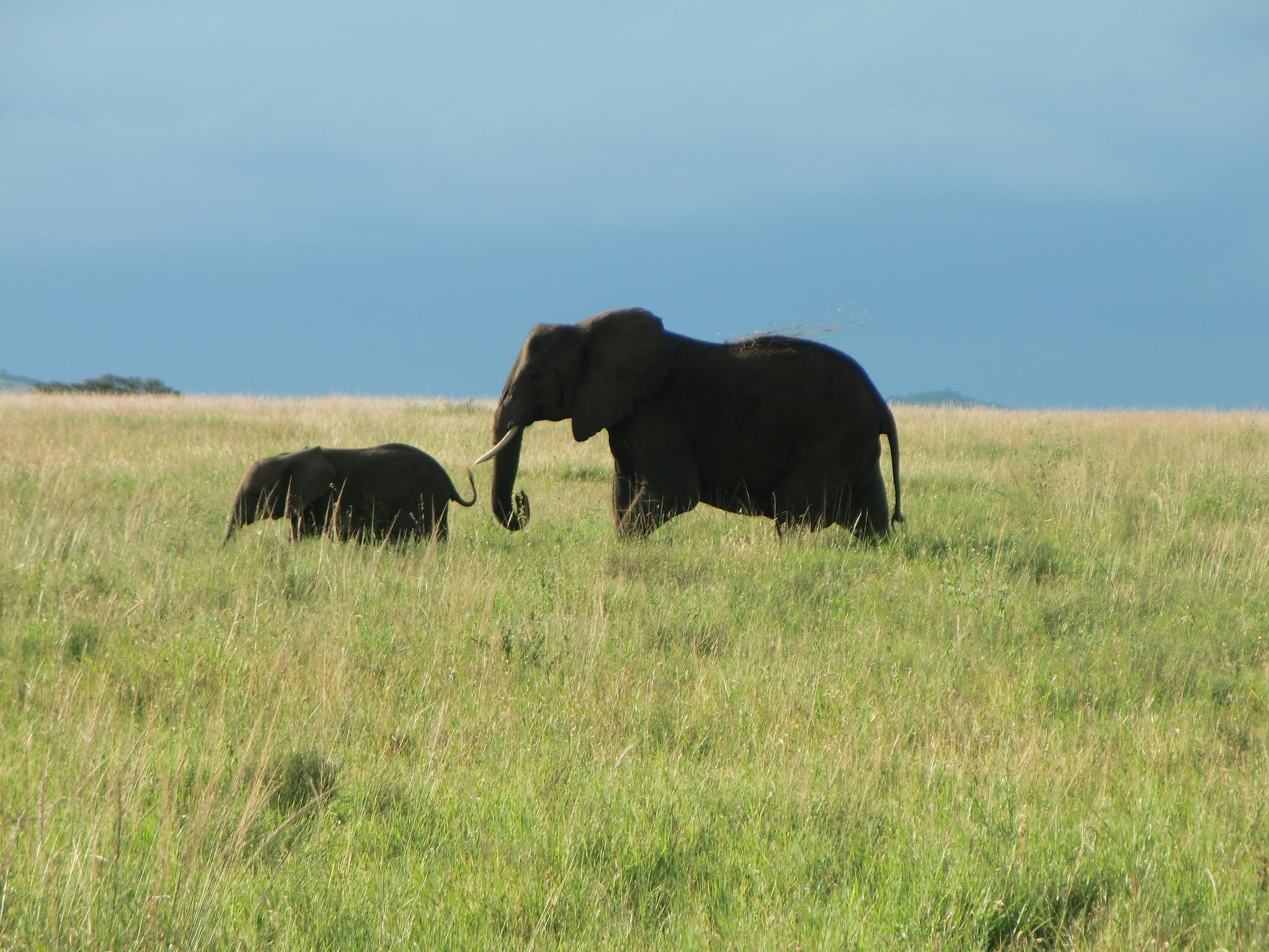 elefant med barn.JPG