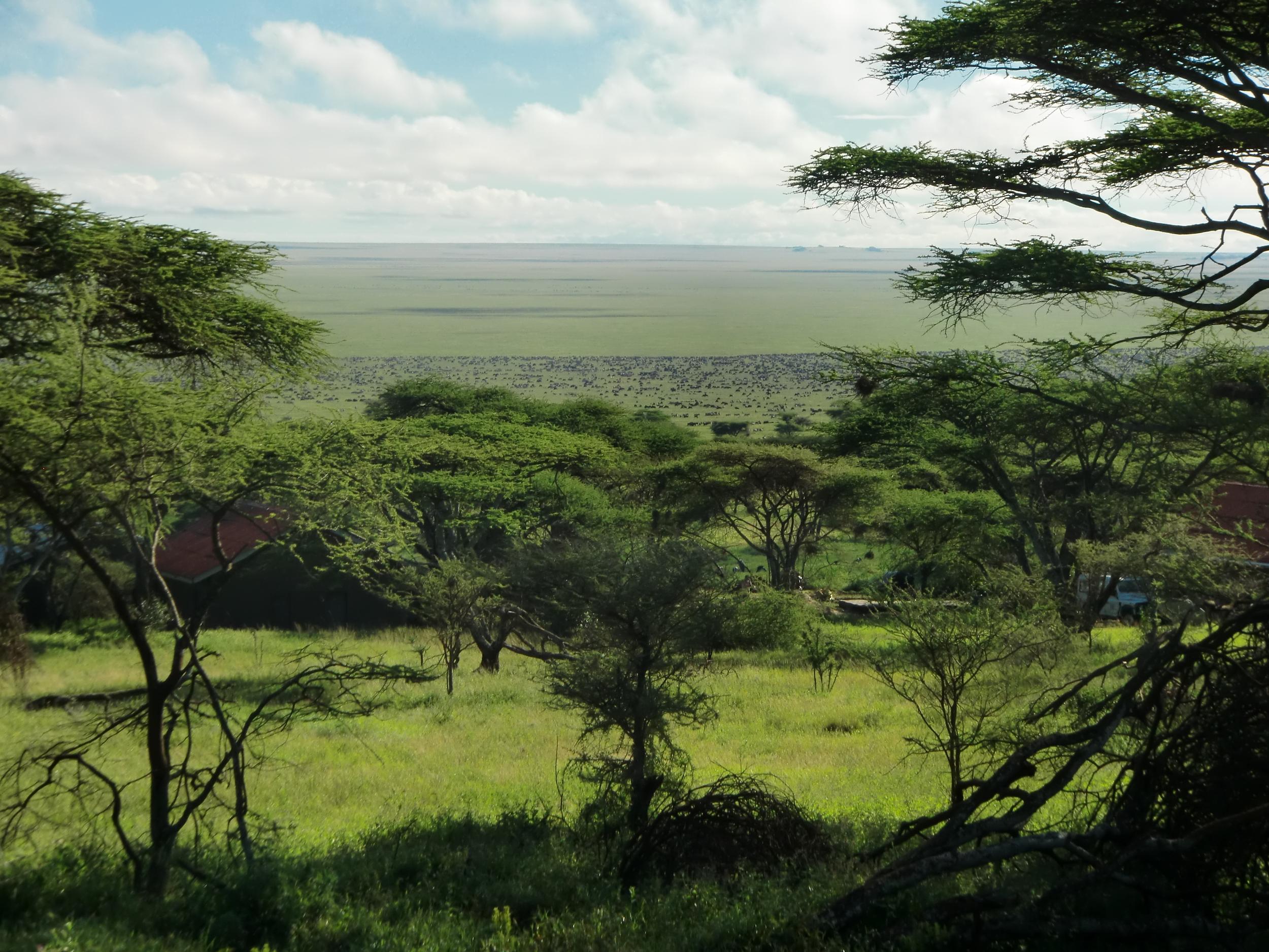 savann migration.JPG