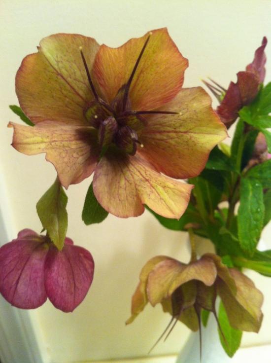 flowers+020.jpg