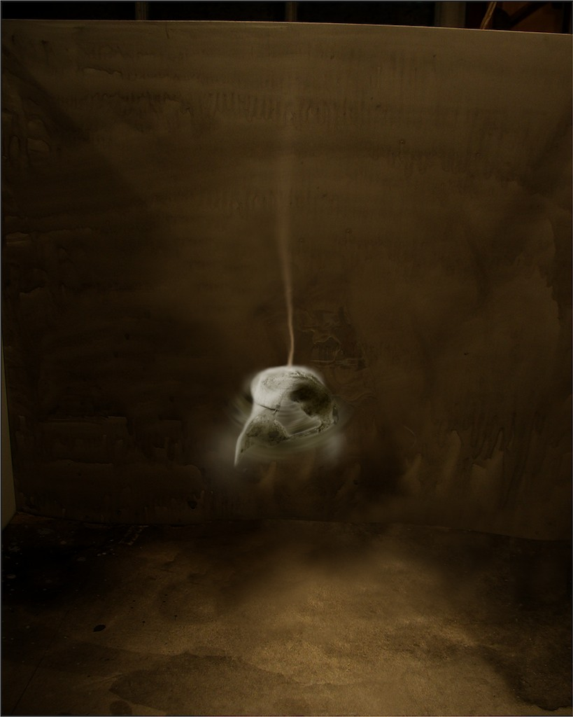 Night Sets (ns 002) owl skull 2004