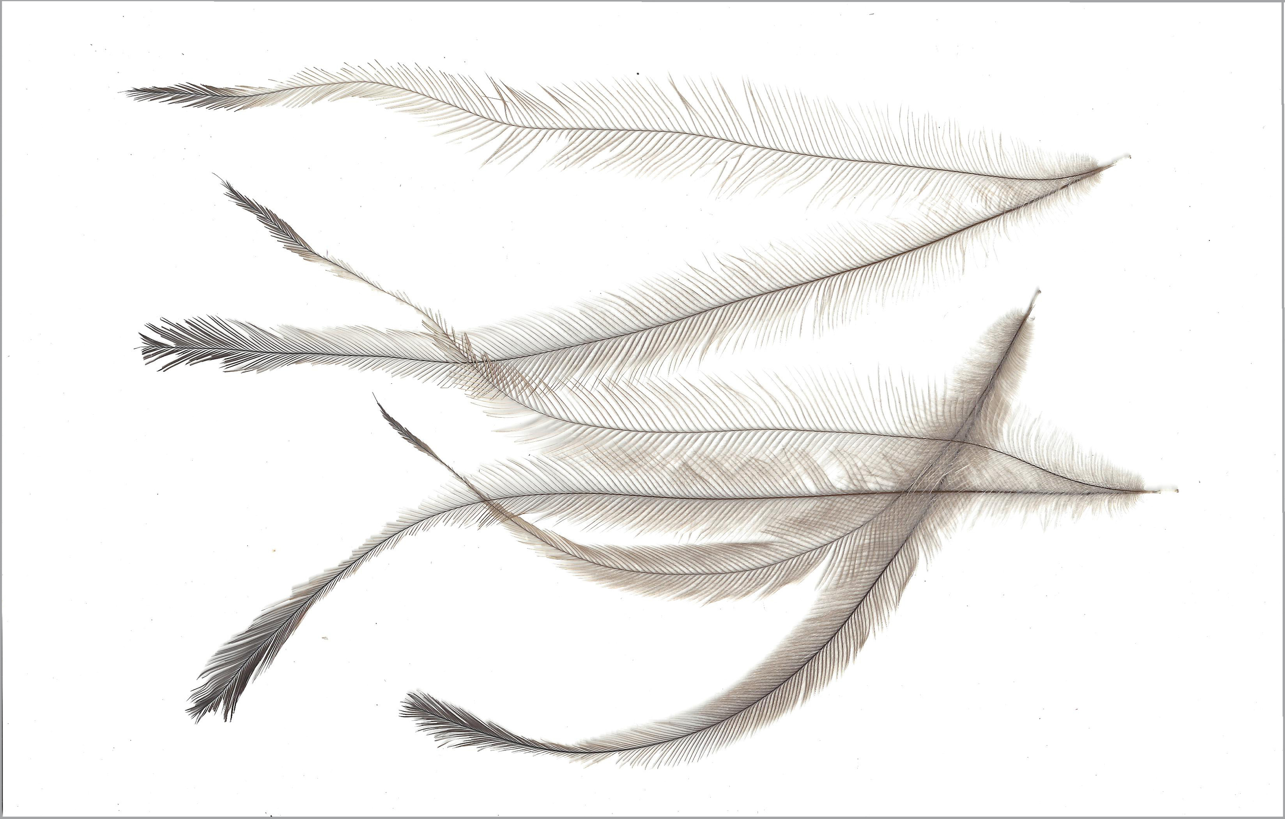 Feathers 6, 2014