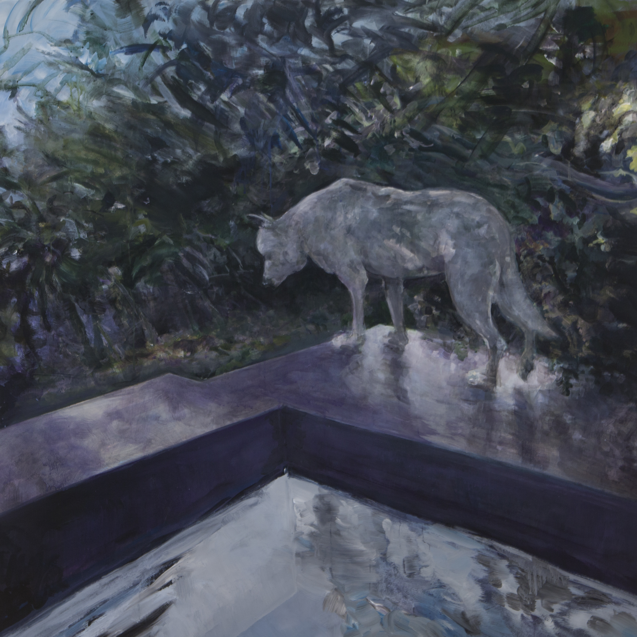 Costa Rica Dog and Pool, 2015 48x48""