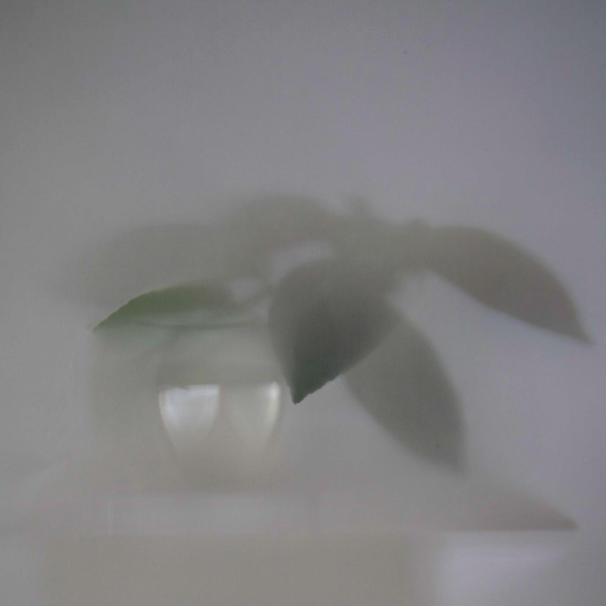 Shadows Lemon Tree (010), 2012-17
