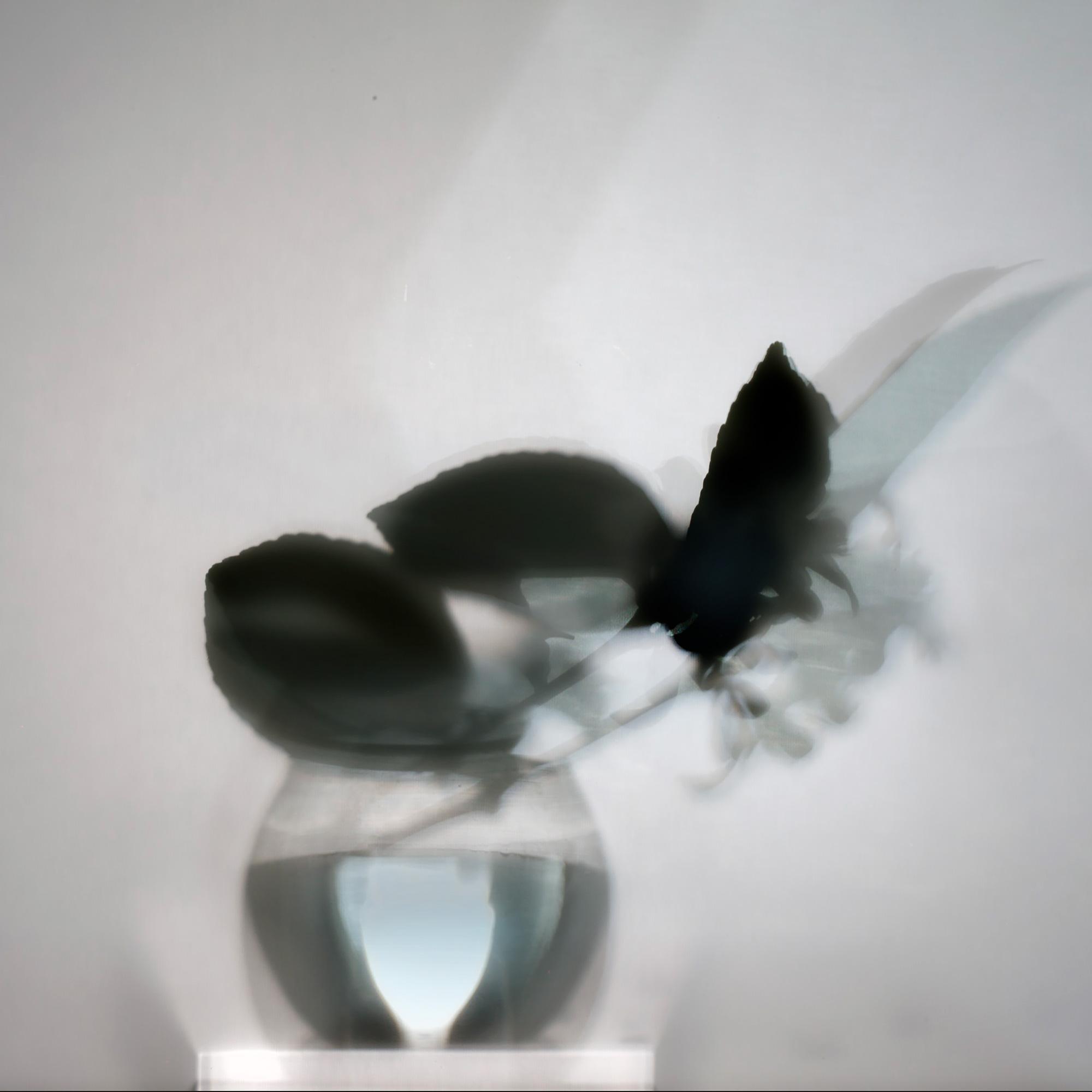 Shadows Lemon Tree (008), 2012-17