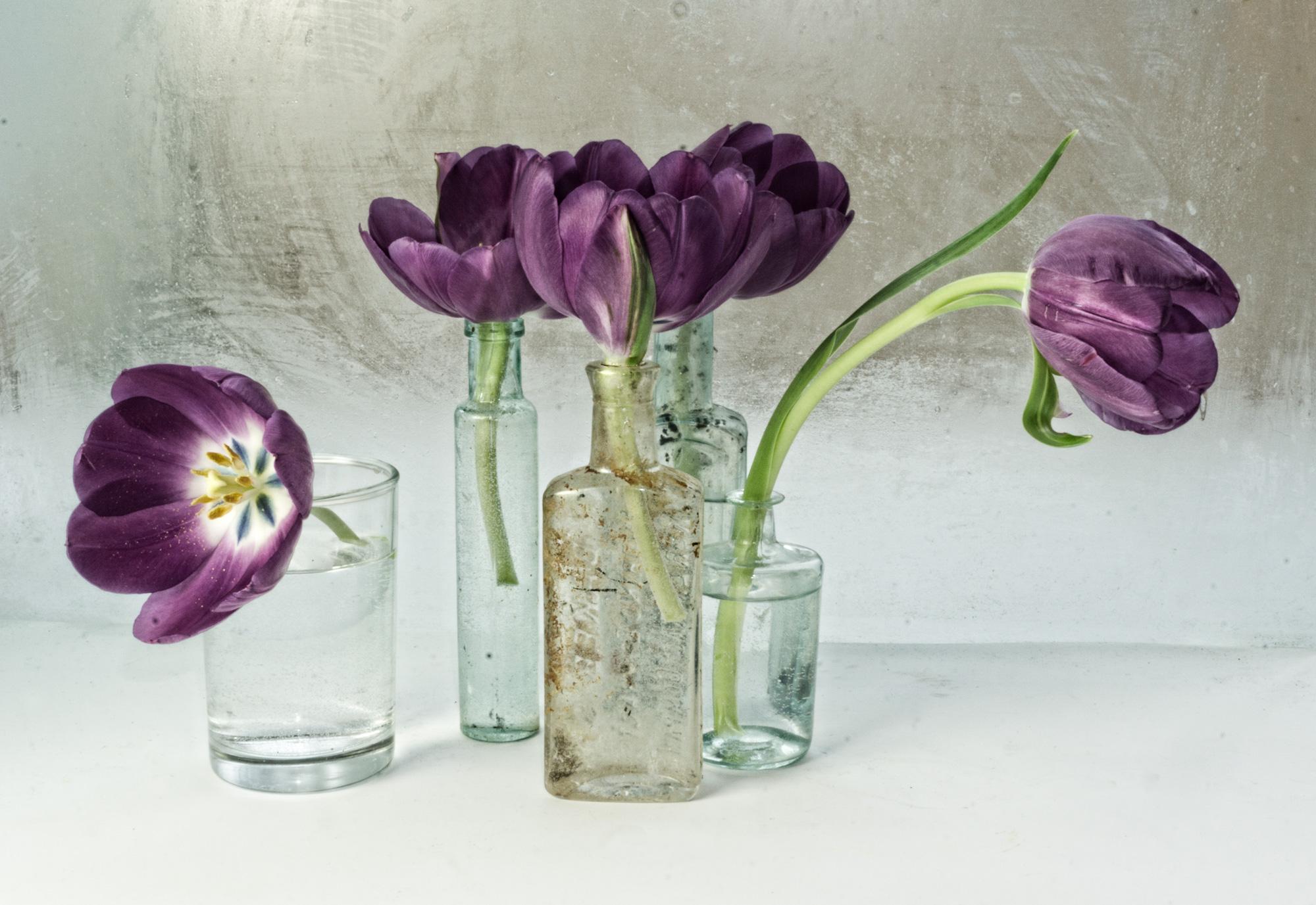 Flower: Tulip 2, 2017