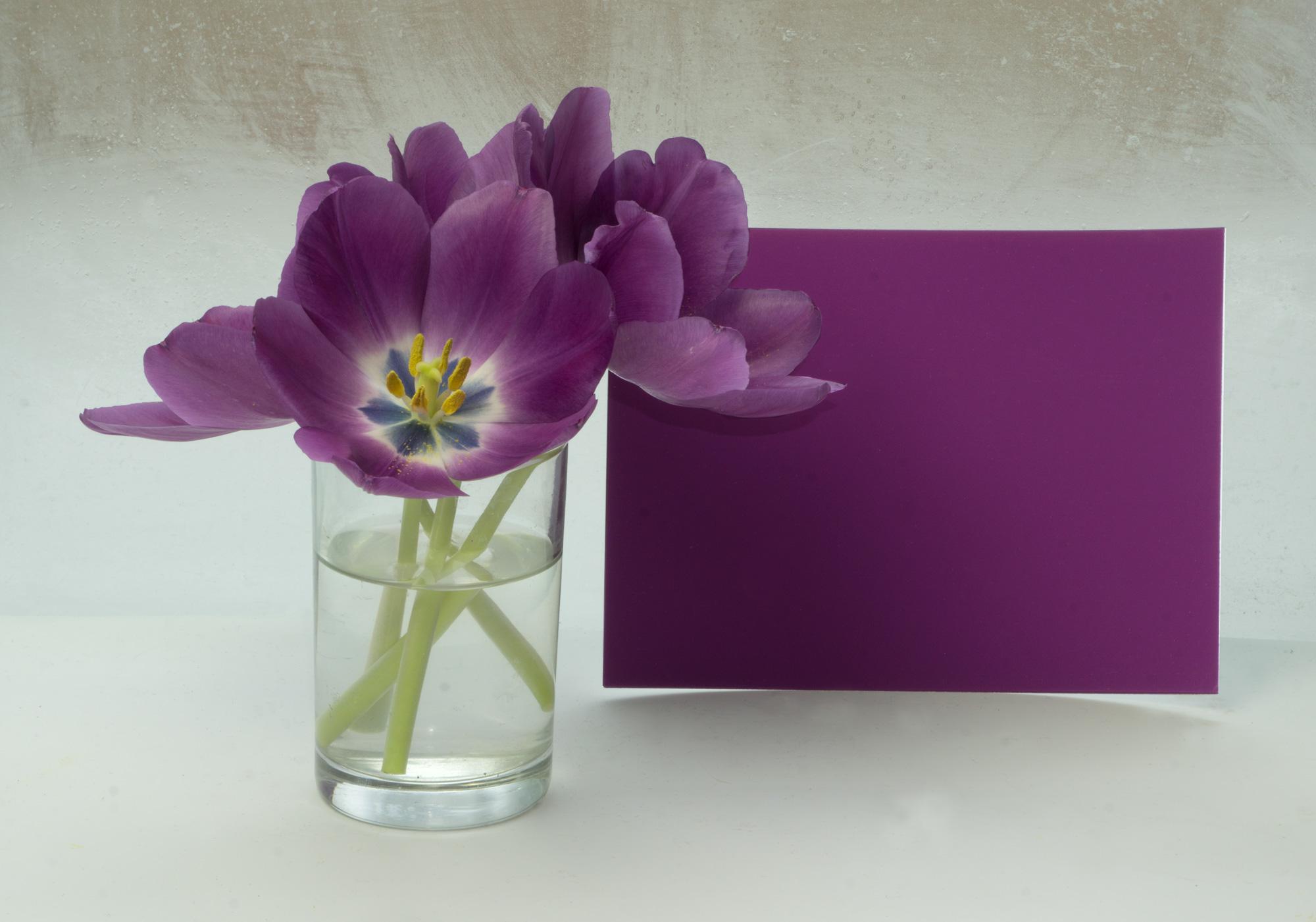 Flower : Tulip 2a, 2017