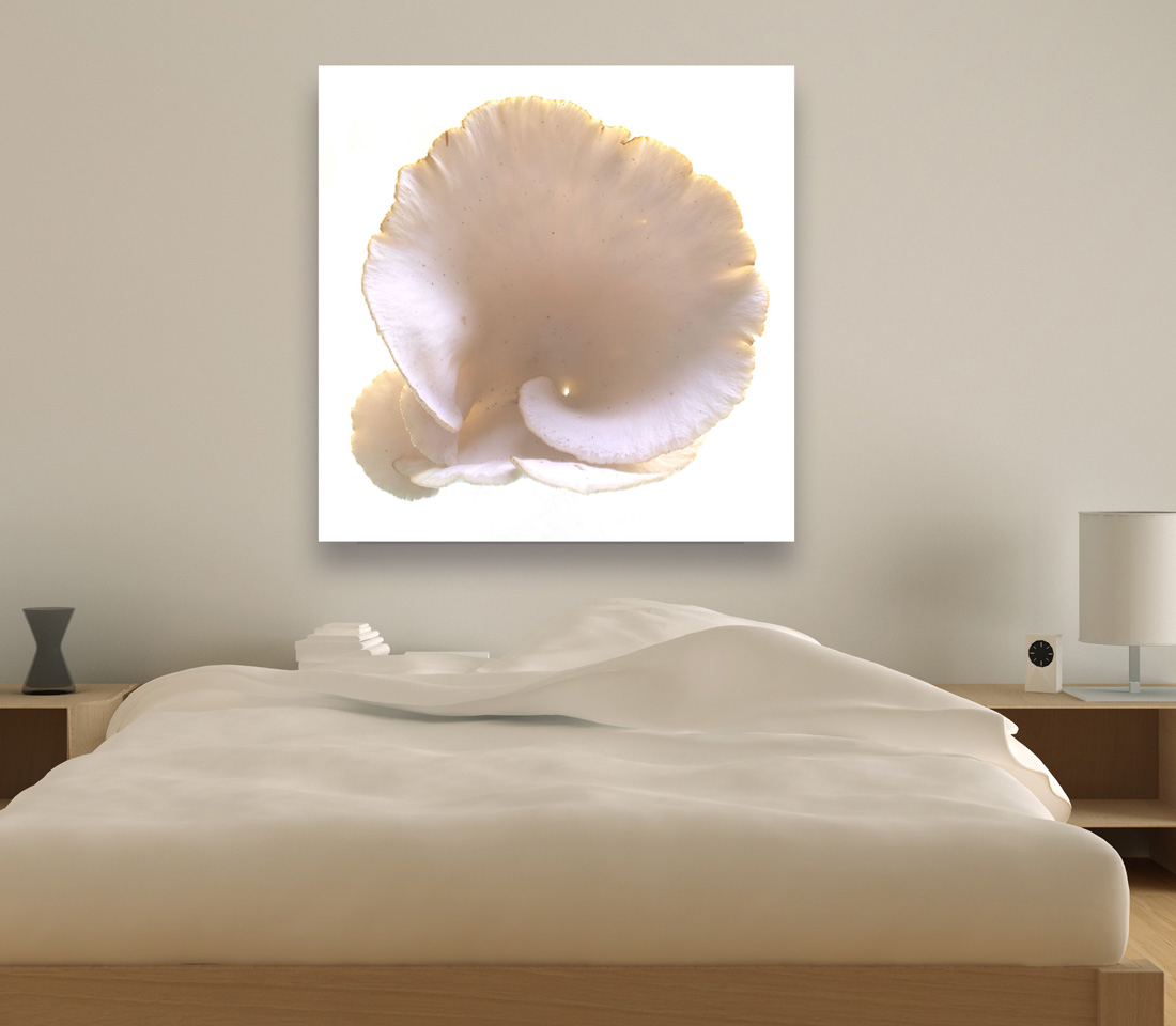 Oyster Mushroom-in-bed-room