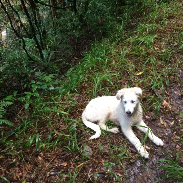 51raw.com-rainforest-winter17-10.JPG