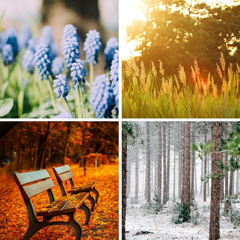Jahreszeitenabo.jpg