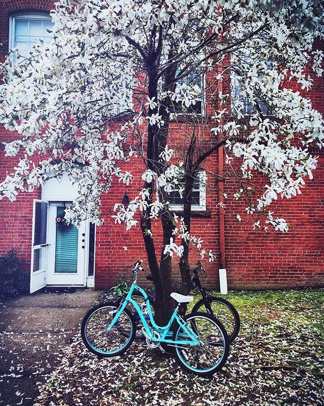 #aprilshowers #rainyday #spring #flowers #igersnewengland #igers413 #othersidema #massachusetts #northamptonma  #newengland #streetphotography