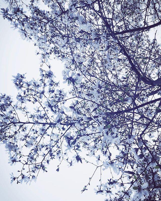#aprilshowers #rainyday #spring #flowers #igersnewengland #igers413 #othersidema #massachusetts #northamptonma  #newengland