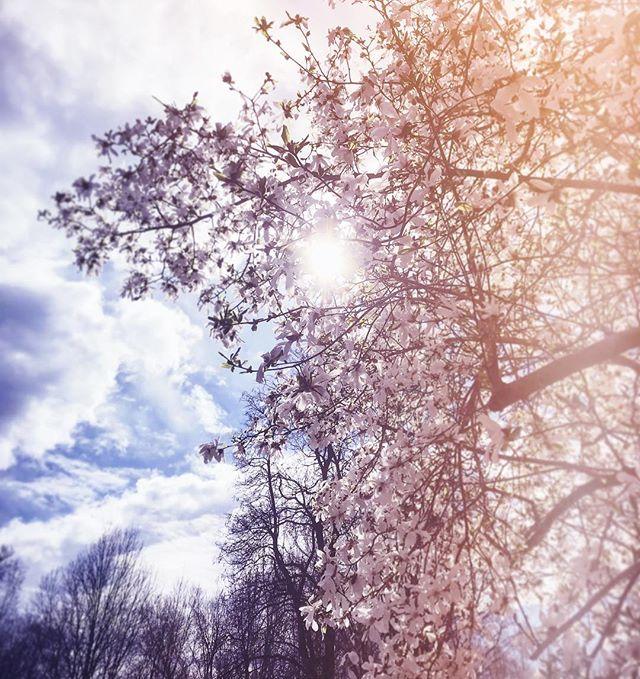 good morning! 💚 #morninglight #spring #flowers #northamptonma #igers413 #igersmassachusetts #othersidema