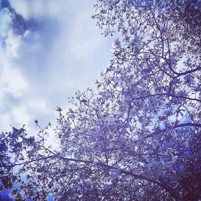 #spring #flowers #northamptonma #othersidema #igers413 #igersmassachusetts #massachusetts #naturalmassachusetts #naturephotography