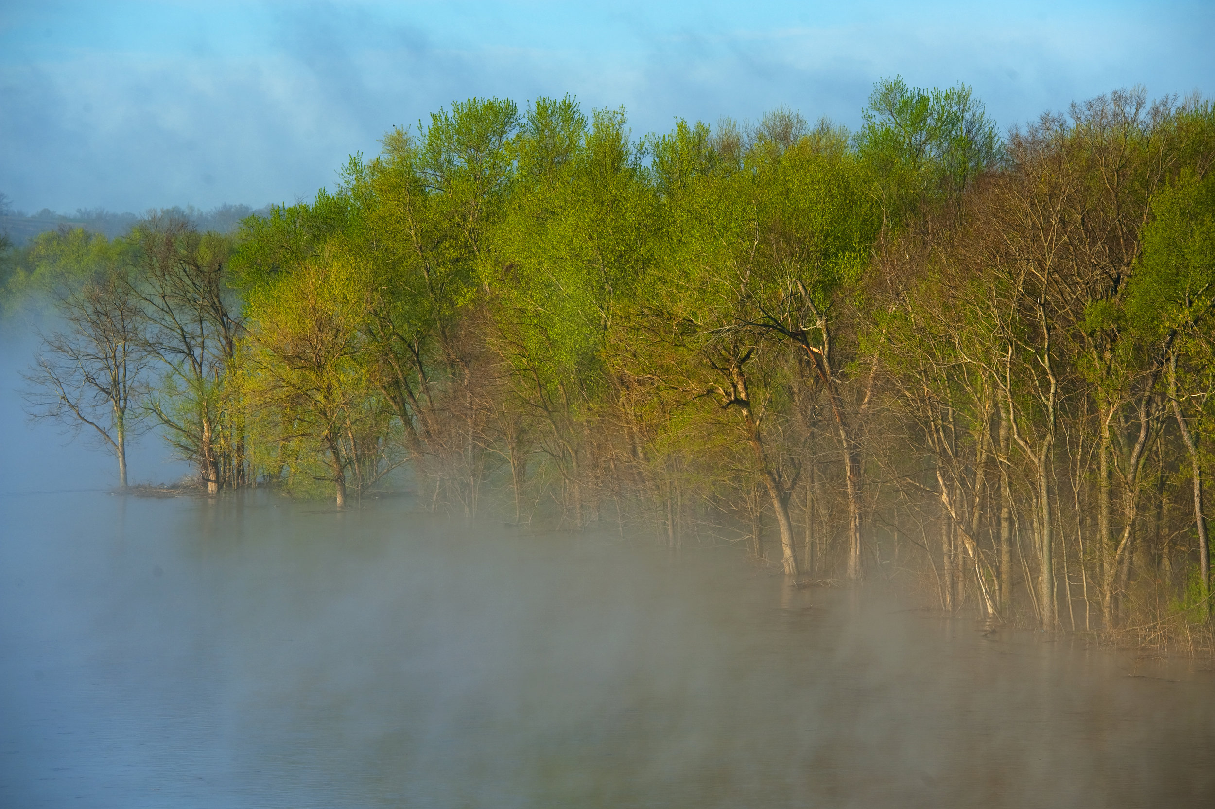 kentucky-flood-river-tree.JPG