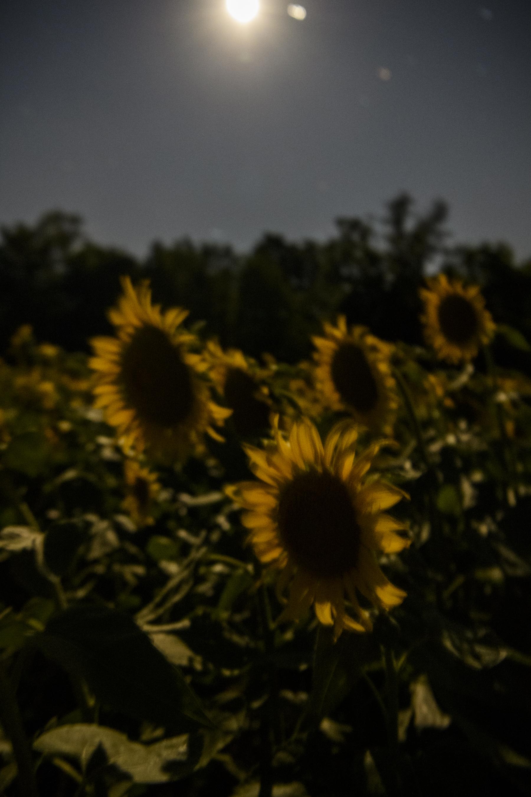 Dawn to Dusk-10.jpg