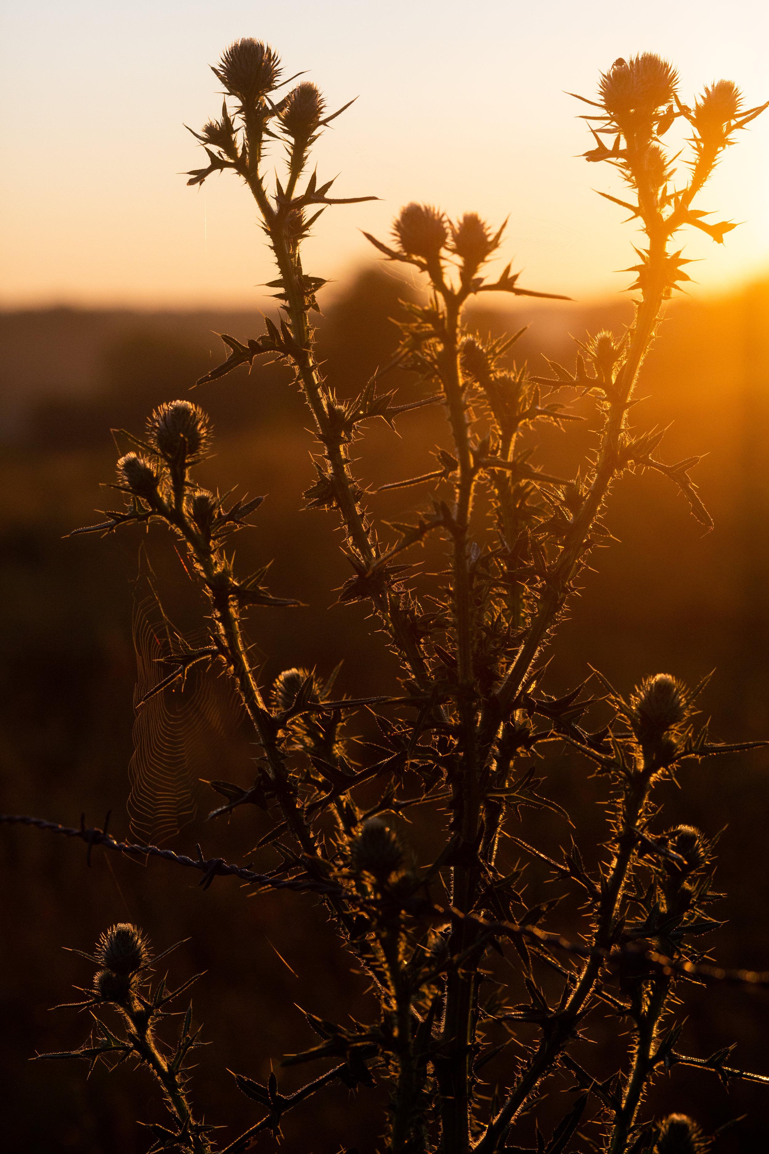 - Dawn to Dusk2 2.jpg