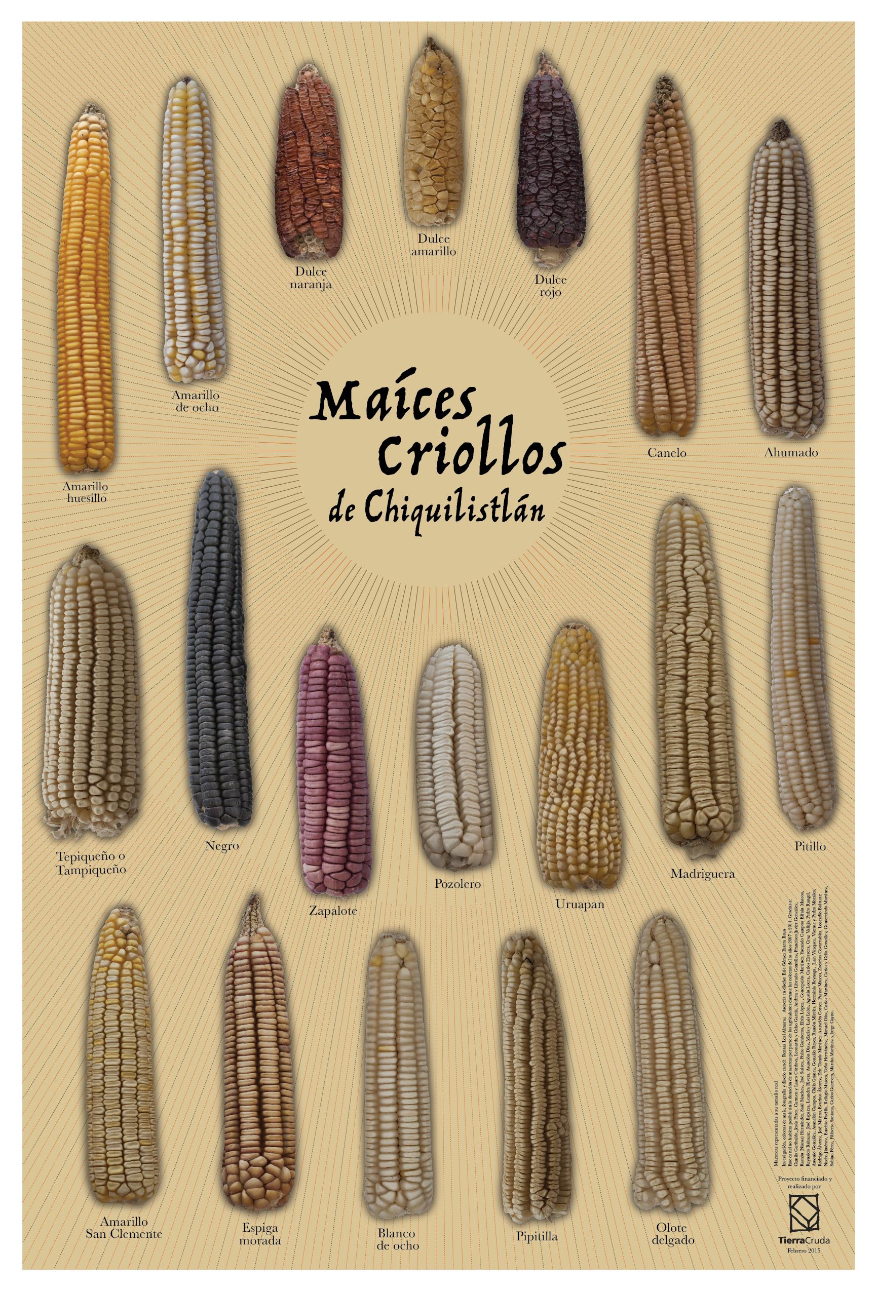 Cartel para promover la diversidad de maíz nativo entre los pobladores de Chiquilistlán, una manera de hacer un pequeño homenaje a sus sembradores. Colecta, fotografía y diseño de cartel: Renata Leal Almaraz.