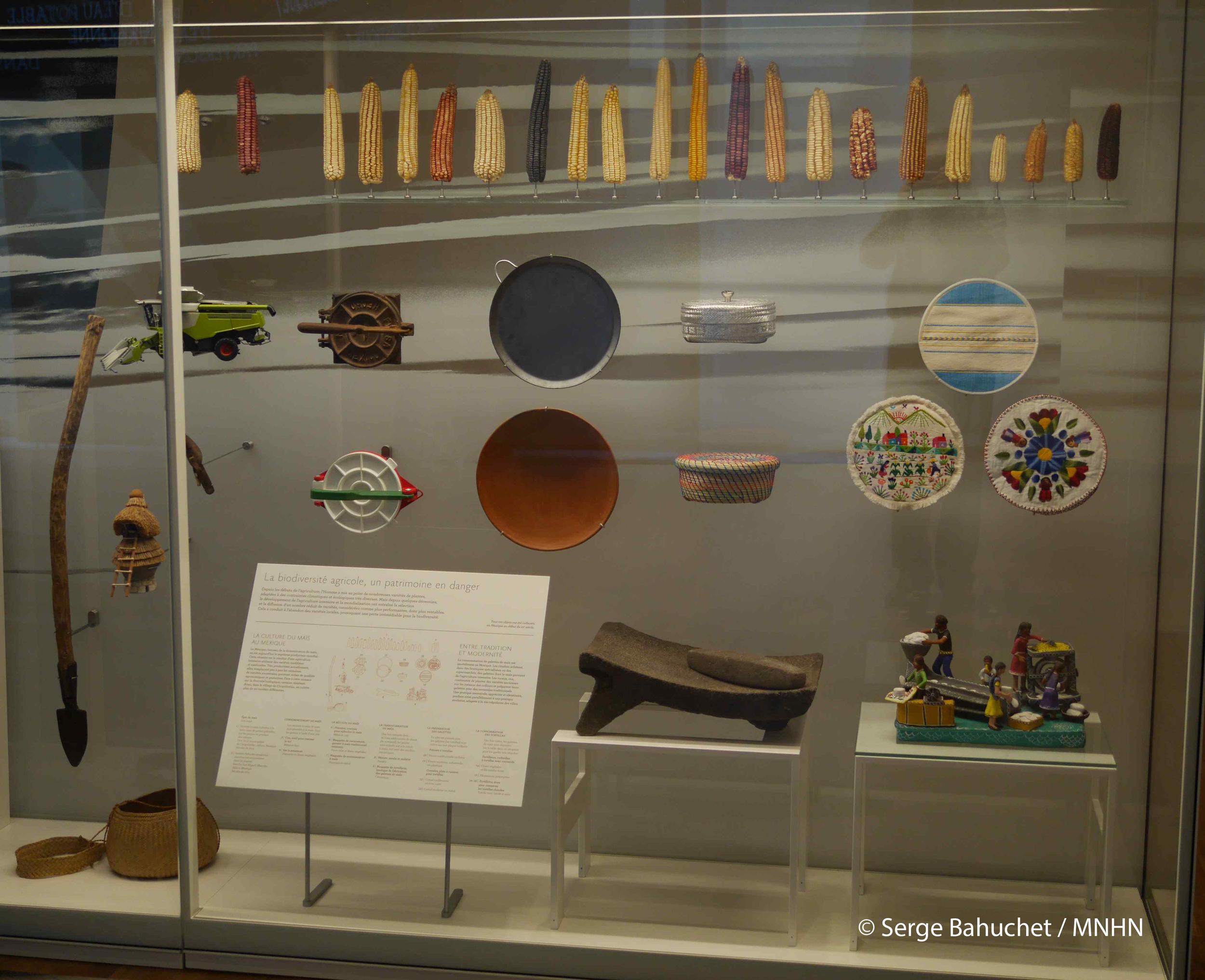 Vitrina en Museo del Hombre, París. Fotografía: Serge Bahuchet /MNHN