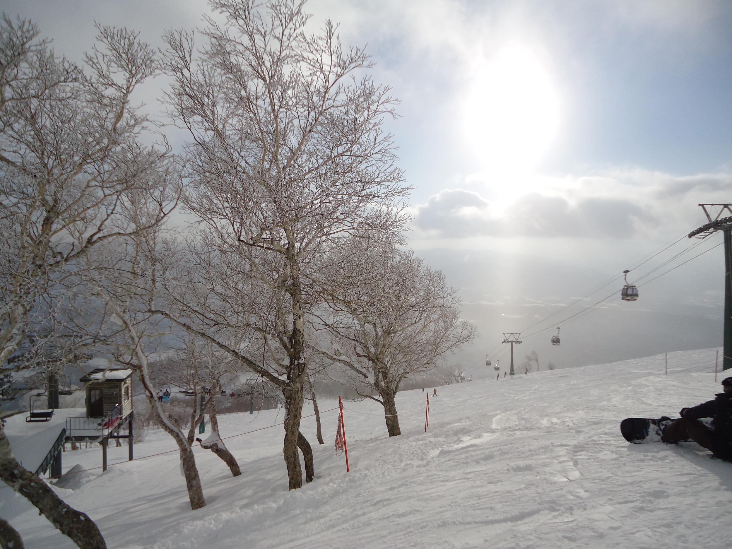 Niseko Snowboarding