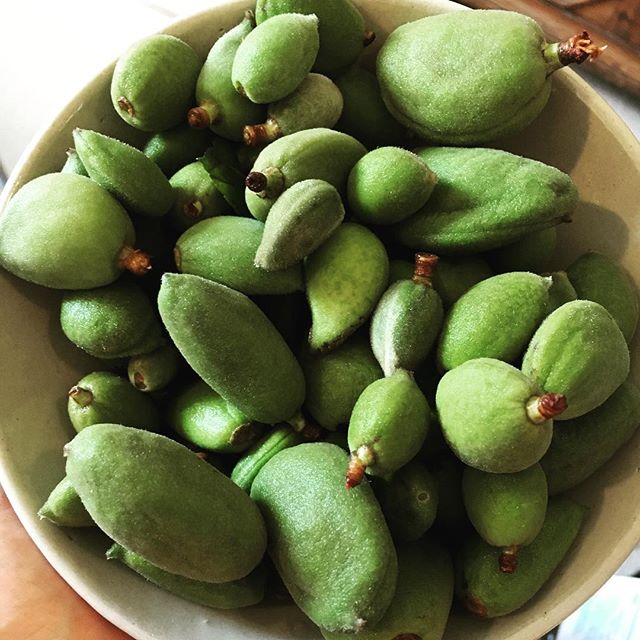 Isn't it great when you find your local shop selling these beautiful green almonds in the heart of London. They are delicious just with a bit of salt. Highly recommended #greenalmonds