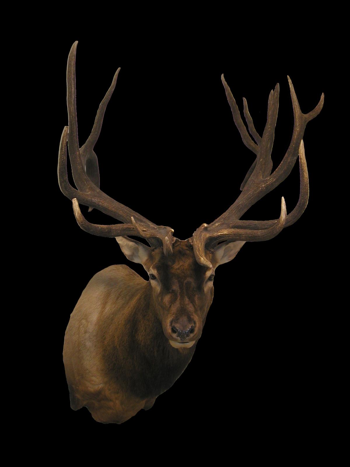 Elk Gallery