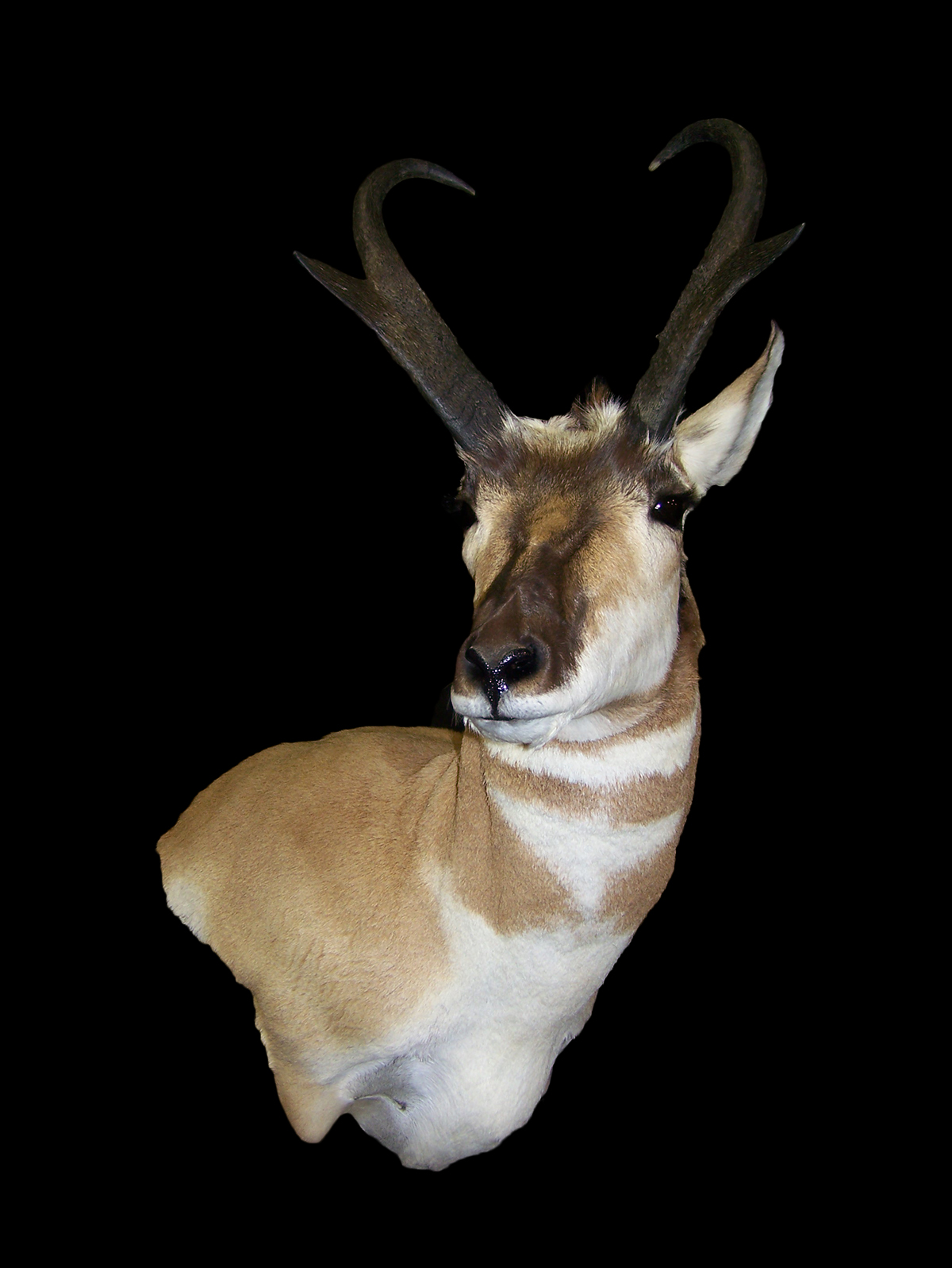 Antelope Gallery