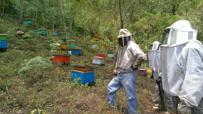 Colorful hives on a hillside in Chiapas, Mexico