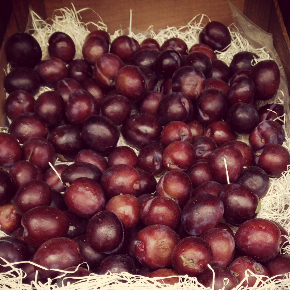 english_plums