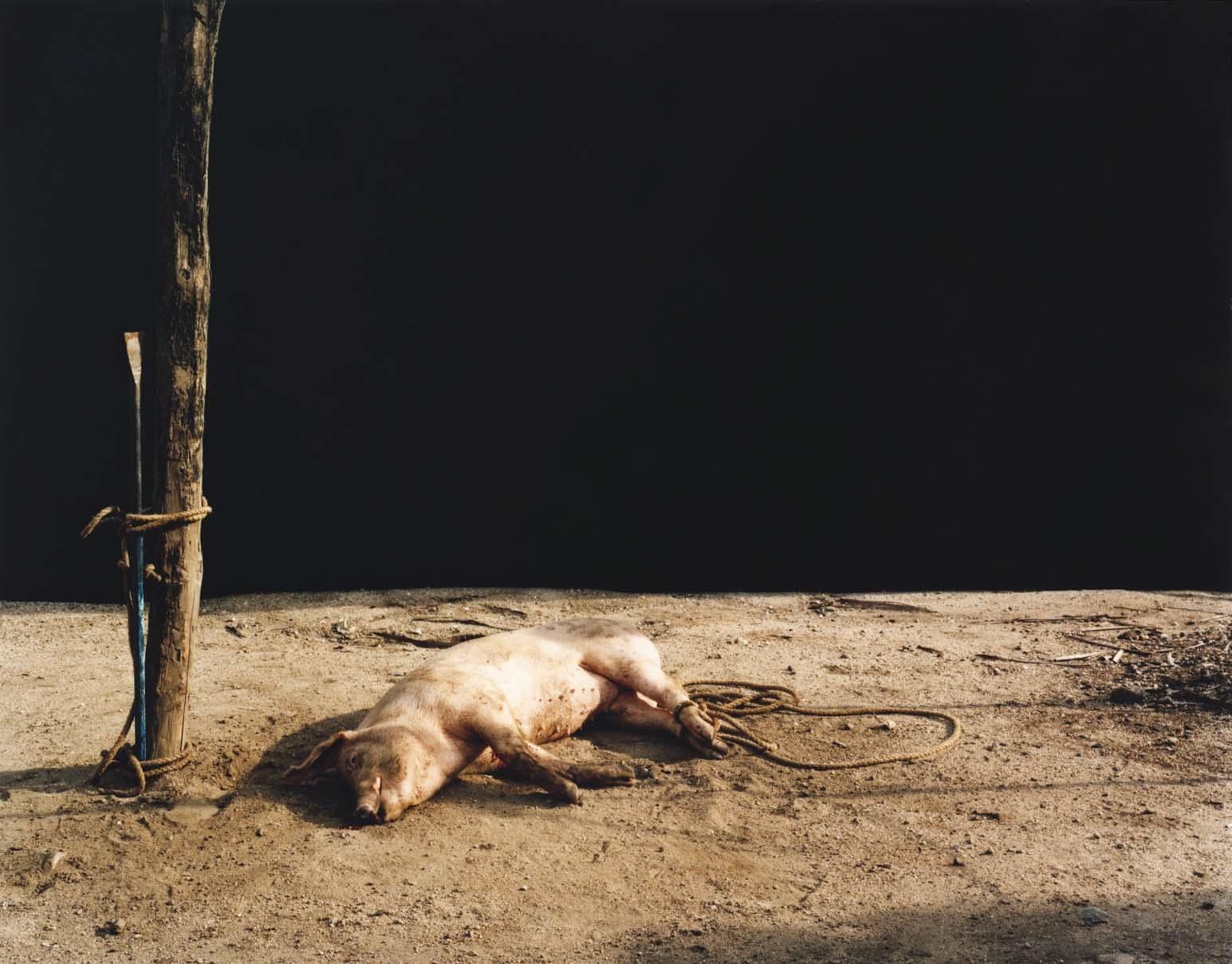 Trevor Appleson,  Death at Sunset , 2007. C-print, 49 1/2 x 62 1/2 inches. © Trevor Appleson.