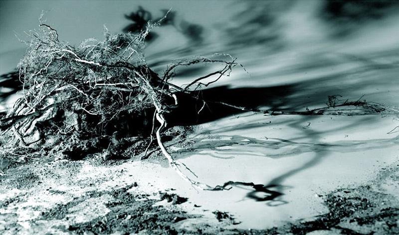 Windblown Tangle, 2006 inkjet print, 99 x 168 cm