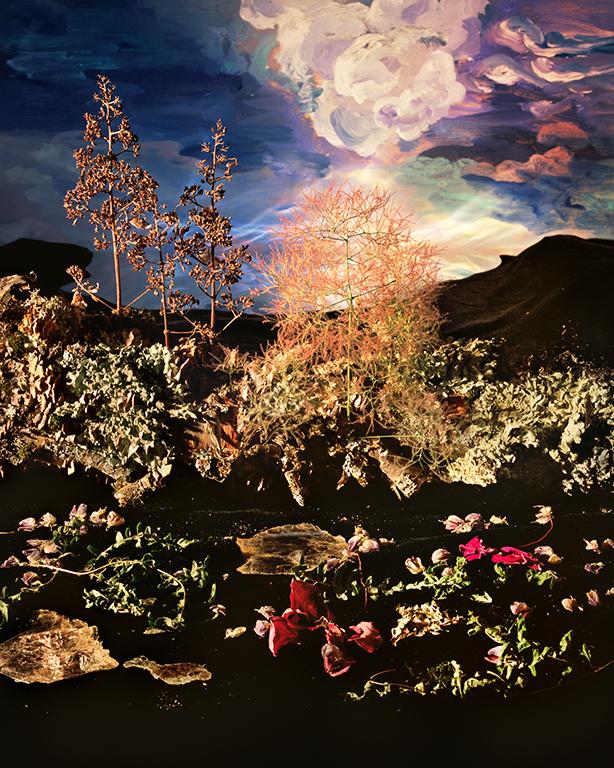 Twilit Smoke Tree, 2016, chromogenic print mounted on Dibond, 122x183 cm