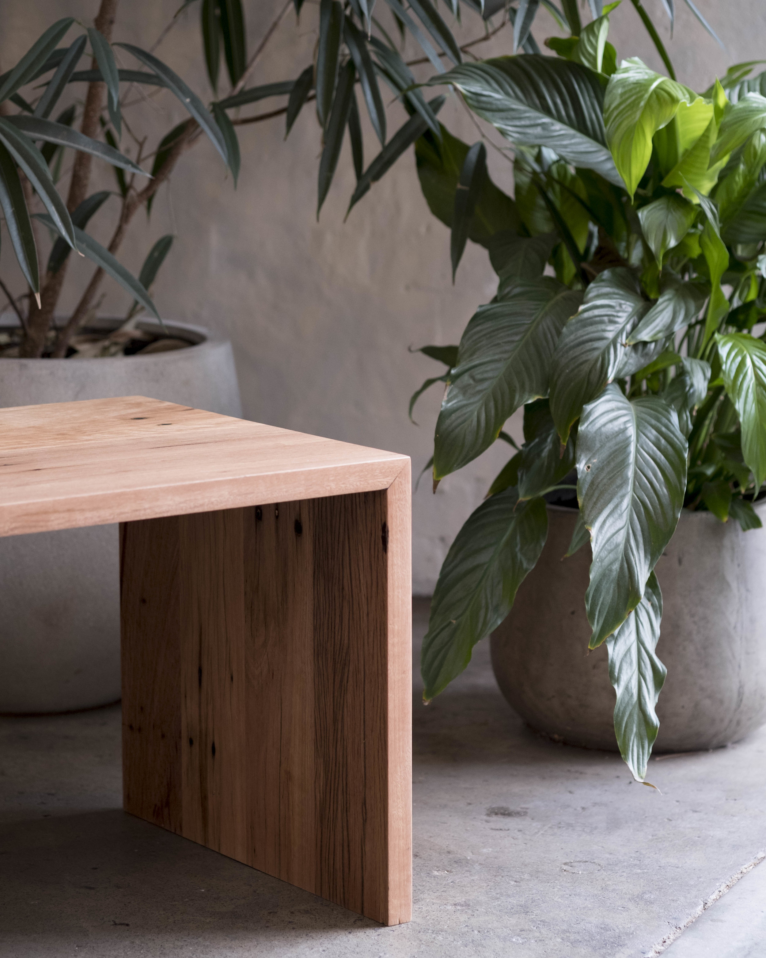 Coffee table and Plants.jpg