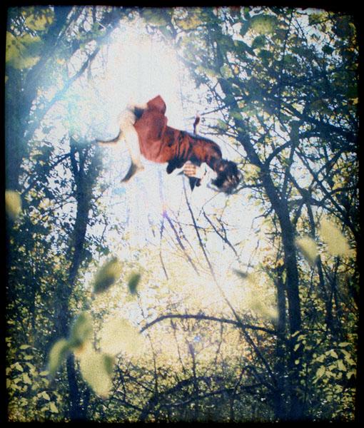 Falling in Trees 14.jpg