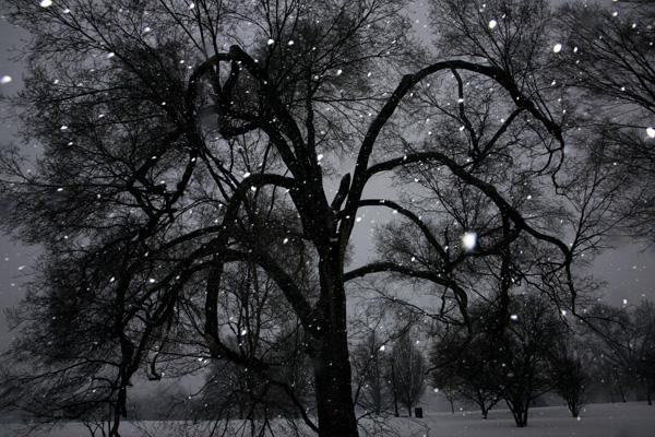 Tree 2,2014.jpg