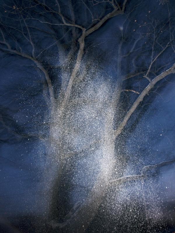 Tree3,2013.jpg
