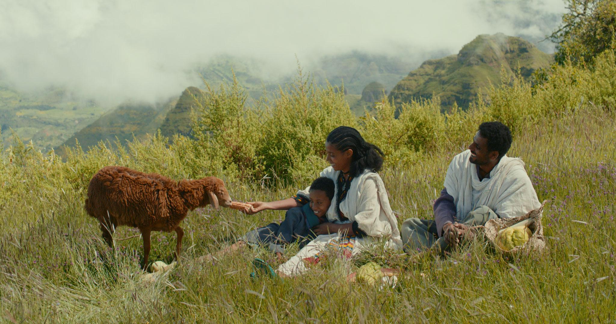 lamb---photo-2.jpg