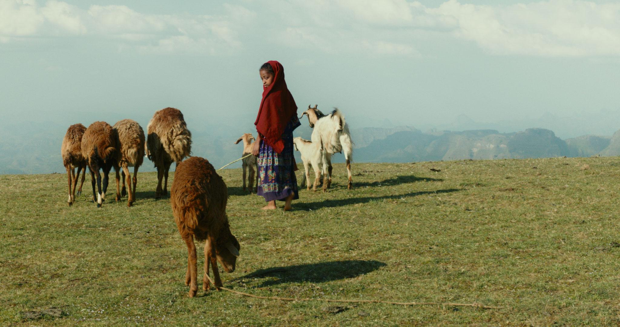lamb---photo-6.jpg
