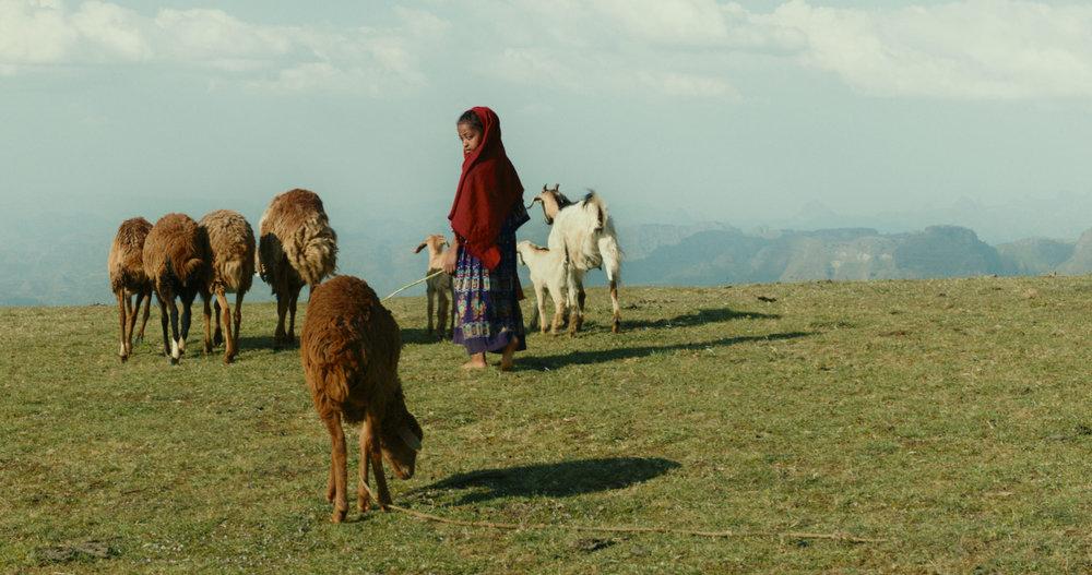Lamb  , Yared Zeleke (2015)