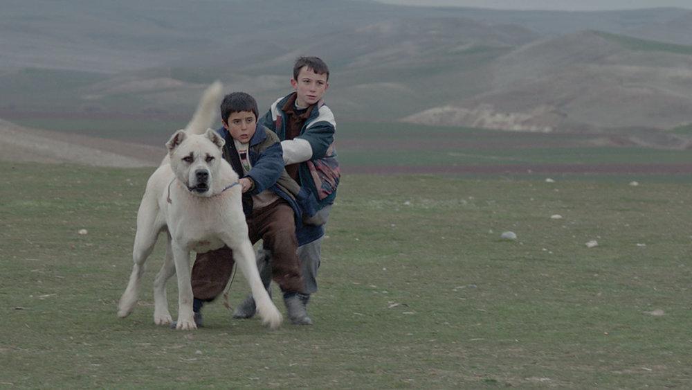 Sivas  ,Kaan Müjdeci (2014)