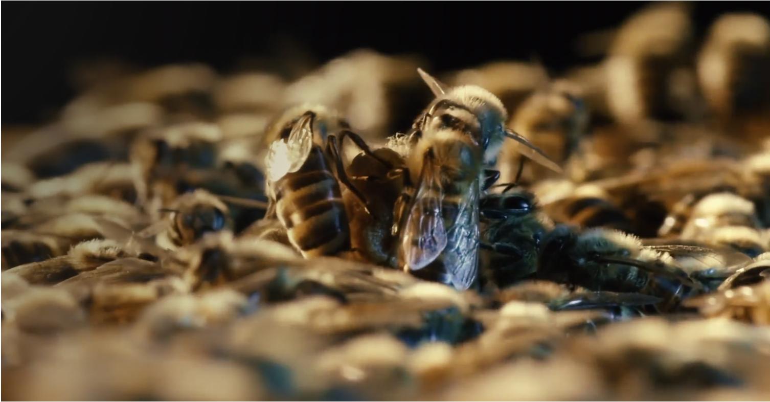 More Than Honey   ,  Markus Imhoof (2012)