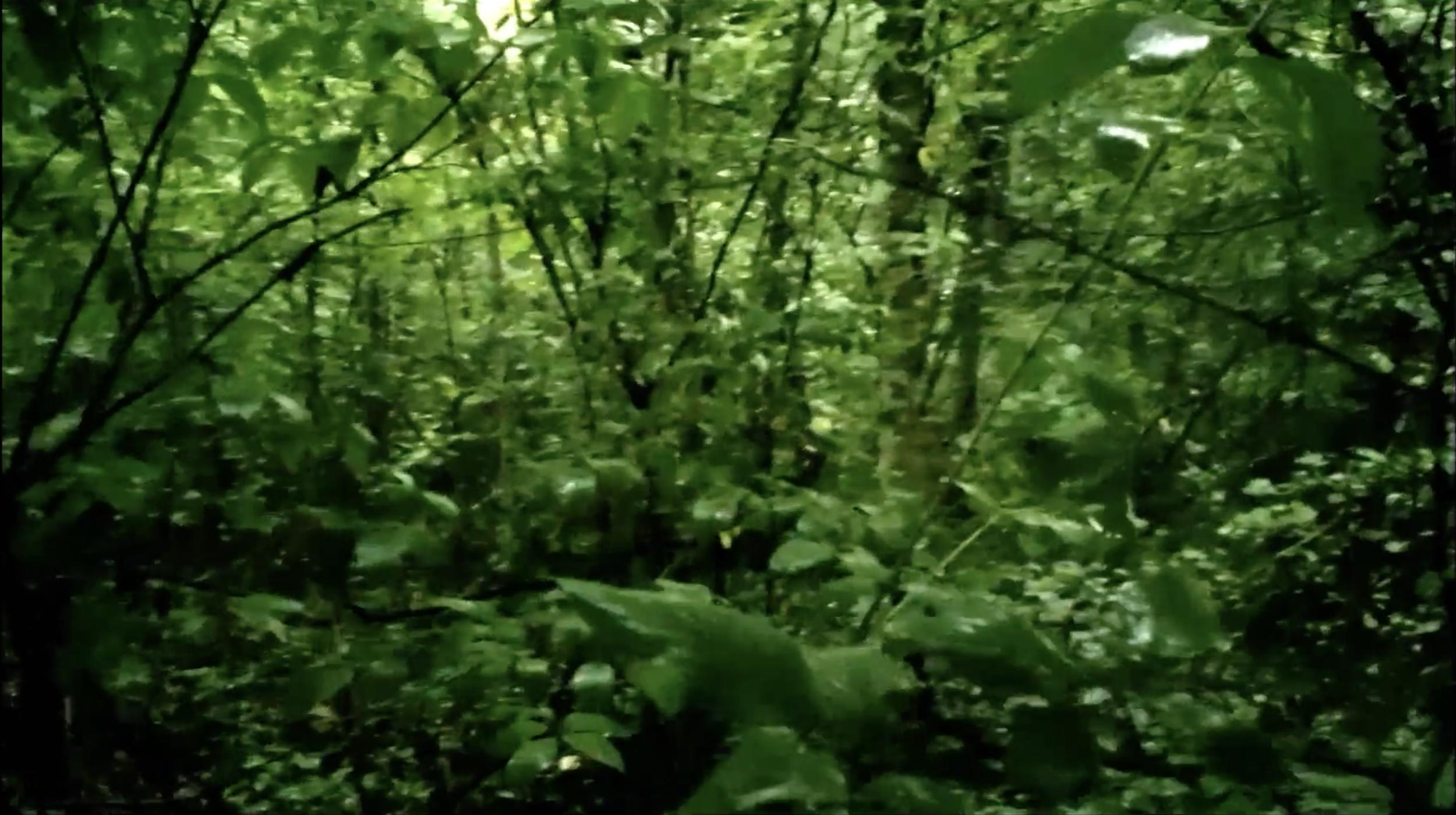 Goodbye to Language  , Jean-Luc Godard (2014)