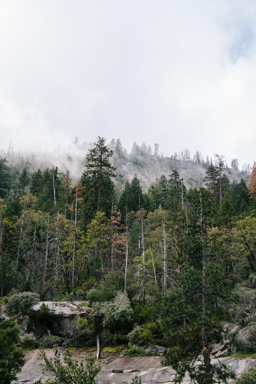 Yosemite April 2016 - Corrie Mick Photography-2.jpg