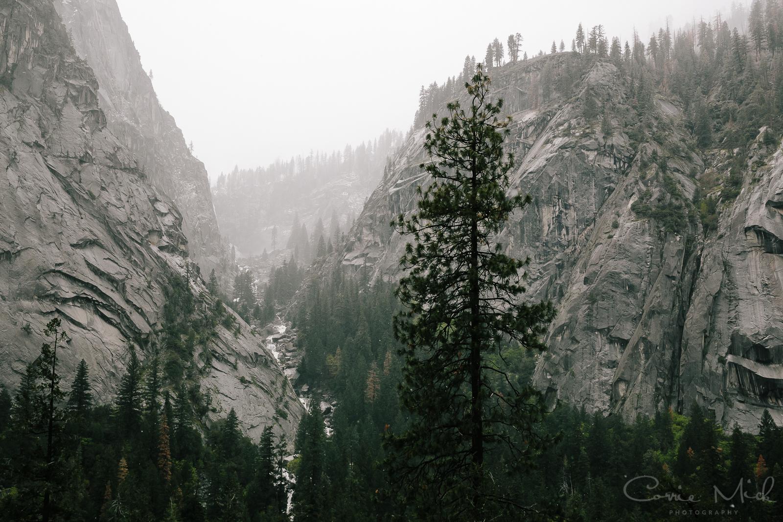 Yosemite April 2016 - Corrie Mick Photography-20.jpg