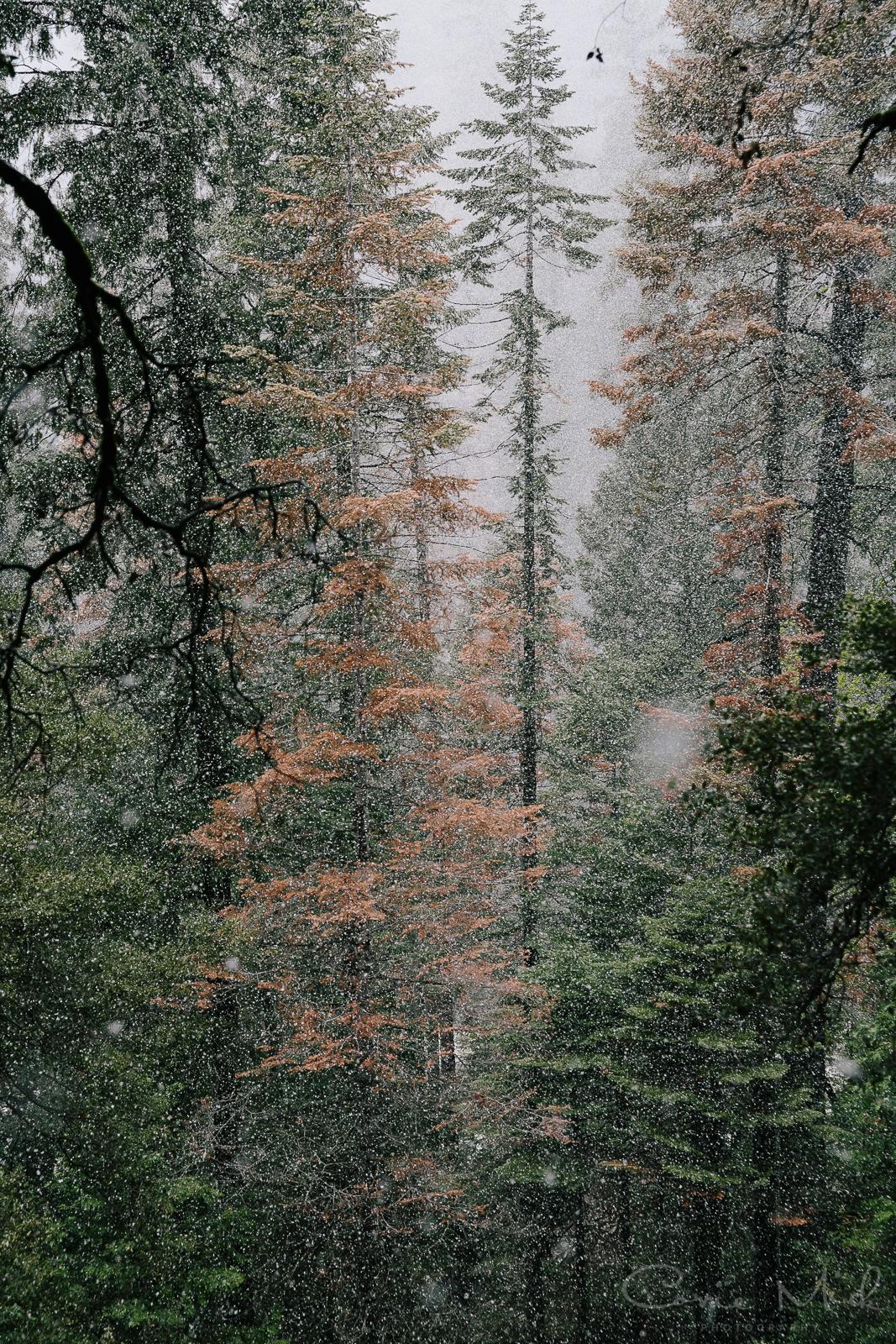 Yosemite April 2016 - Corrie Mick Photography-28.jpg