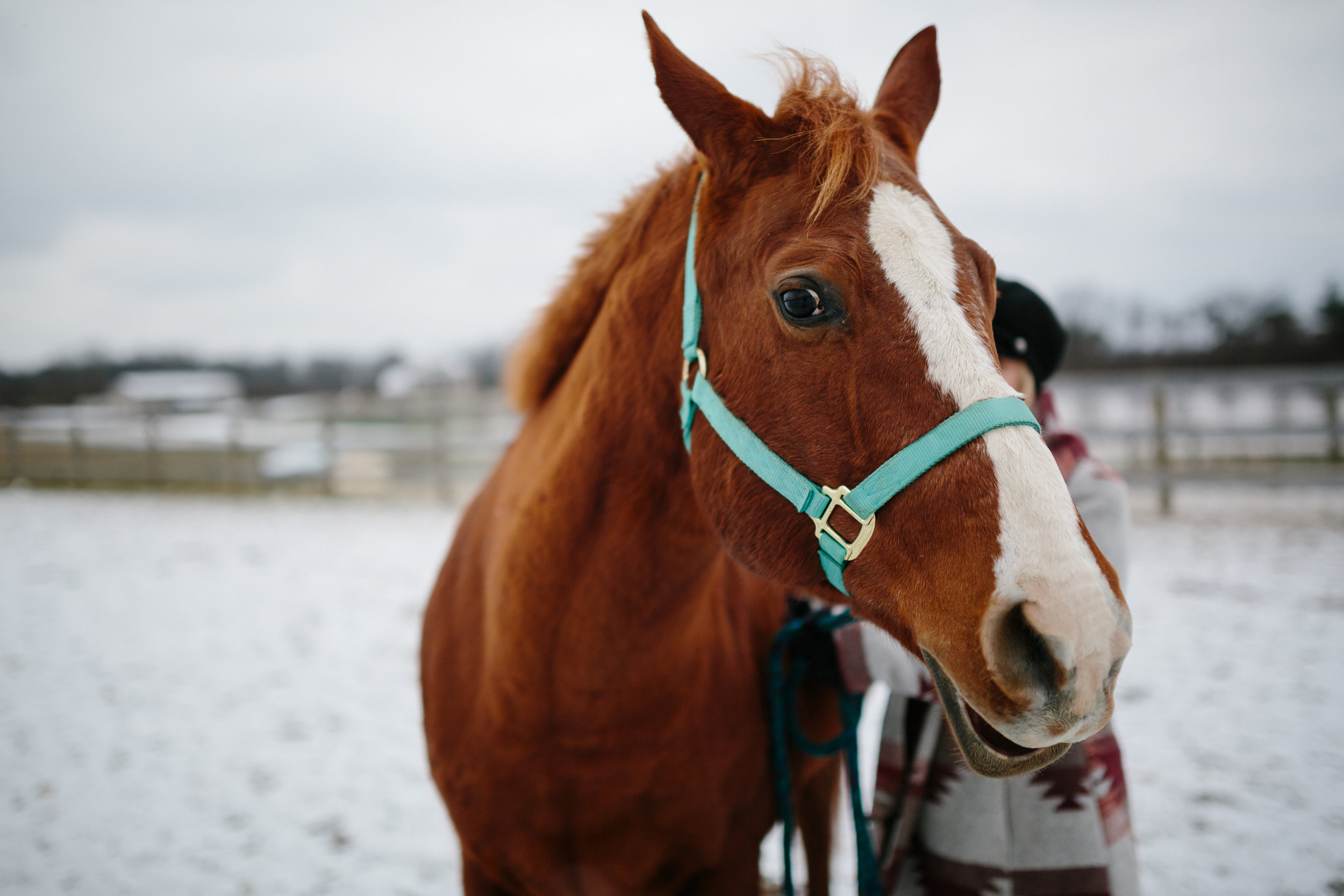 Jess & Shea at the Horse Barn in the Snow - Corrie Mick Photography-99.jpg