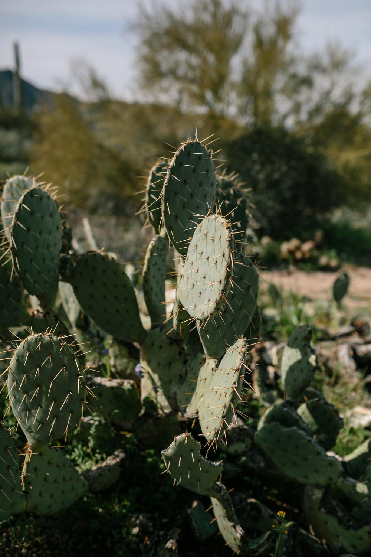 Usery Mountain Regional Park in Arizona - Corrie Mick Photography-16.jpg