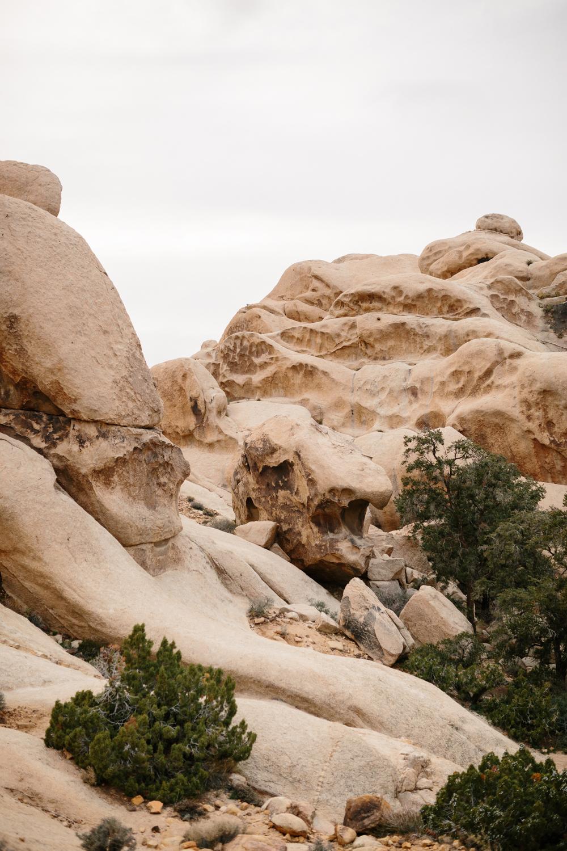 Joshua Tree National Park February 13 - Corrie Mick Photography-12.jpg
