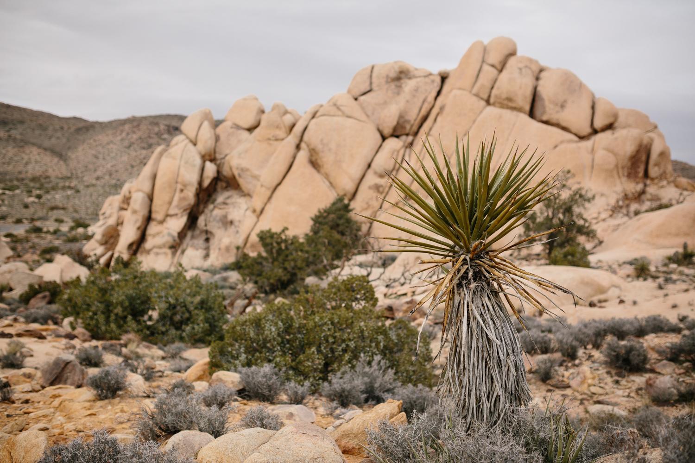 Joshua Tree National Park February 13 - Corrie Mick Photography-15.jpg